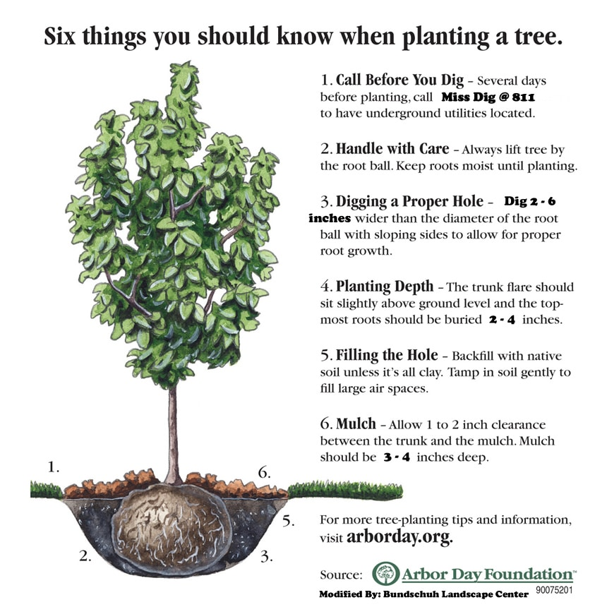 Tree planting instructions with tree diagram to assist in tree installations